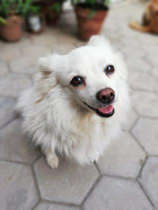 nova 3e camera sample portrait dog