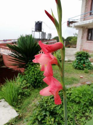 huawei nova 3e camera sample flower