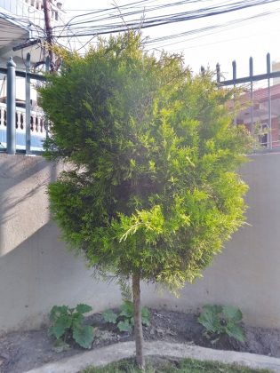 Nokia 2.3 Normal Images Sample 3