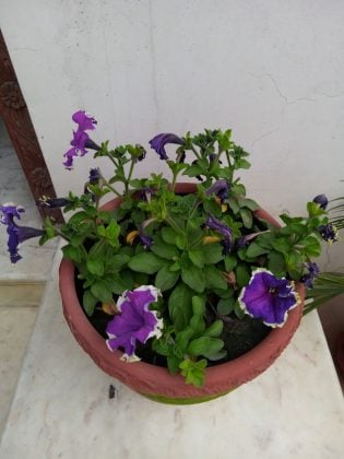 Nokia 2.3 Normal Images Sample 4
